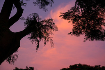 silhouette of tree against beautiful pink sky