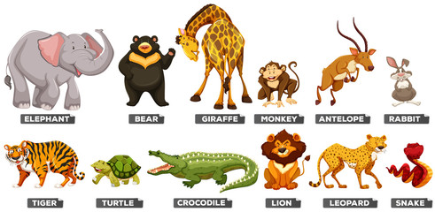 Wild animals in many types