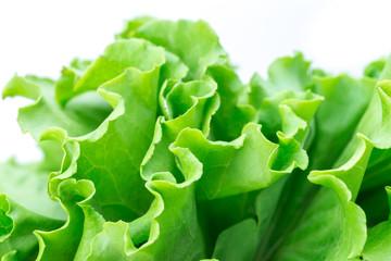 Harvest, fresh green salad leaves