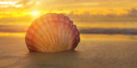 Beautiful beach with sunrise background. Focus on sea shell.