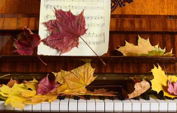 maple leaves on a piano