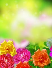 Summer landscape. Flowers roses