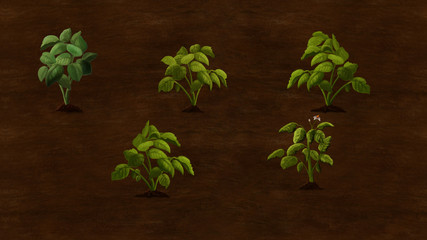 Potato plants growing in the field. Digital background raster illustration.