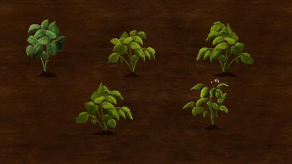 Potato plants growing in the field. Digital background raster illustration.