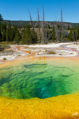 Morning Glory Pool at Upper Geyser Basin