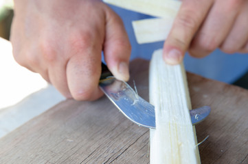 The working of Papyrus in Syracuse: an artisan is obtaining thin strips from the stem of the plant using a particular knife