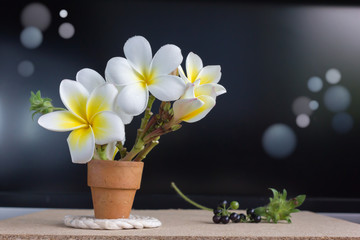 Tuinposter Frangipani white flower plumeria in mini baked clay vase in boutique and vintage style background