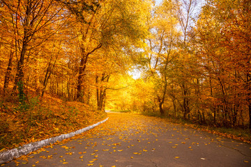 Gold Autumn in the city park - Beautiful Yellow Trees and