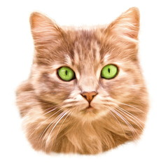 green eyed cat  - illustration based on own photo image