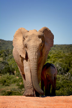 Mother and child elephants, Addo Elephant national park, South Africa