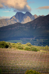 Winery in Western Cape, Western Cape, Cape Town, South Africa