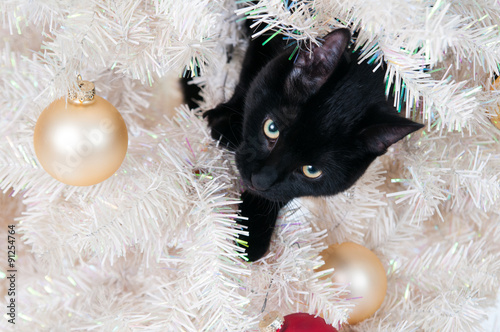 naughty black cat in a christmas tree