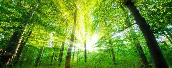 Fototapete - Wald mit Sonnenstrahlen
