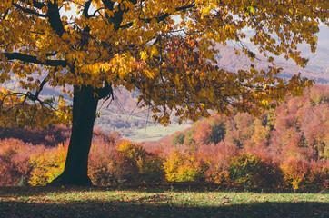Autumn tree on a glade