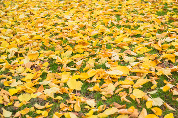 orange autumnal park