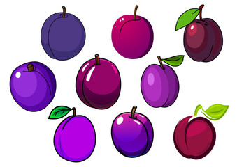 Fresh isolated purple and violet plum fruits