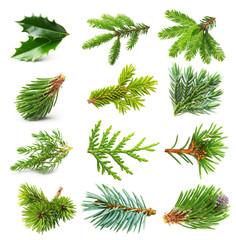 Evergreen tree branch set