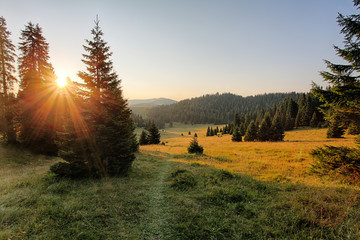 Fototapeten Wald Mountain country with forest