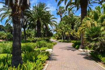 Beauty garden in Israel, road between palms