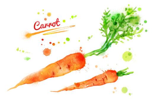 Watercolor carrots.