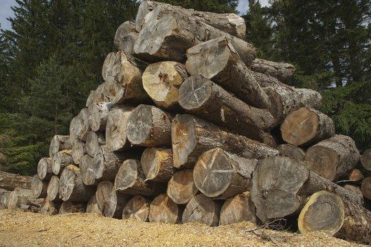 houtstapel driekhoek