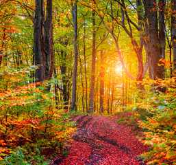Colorful autumn sunrise in the dark mountain forest.