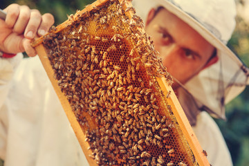 Beekeeper collecting honey