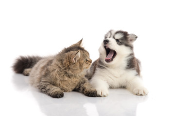 Cat and dog together lying on a white background