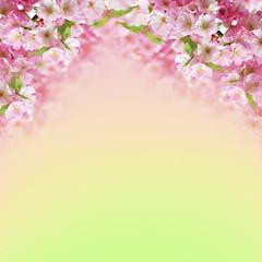 Photo of blooming pink cherry sakura flowers