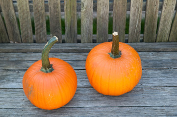 two pumpkins on a wooden bench