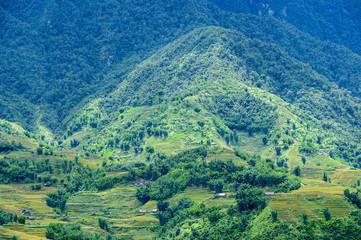 Rice fields on terraced in rainny season at SAPA, Lao Cai, Vietn