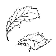 decorative Feather
