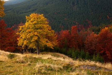 Autumn colors. Mountain forest
