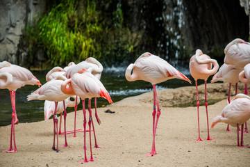 Sleeping flamingos.