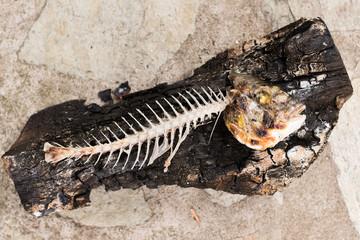 Fish bones of Gilt-head bream - Sparus aurata