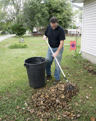Homeowner Raking Leaves In The Front Yard