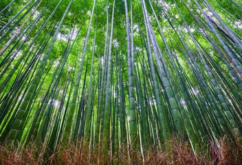 Bamboo forest, Arashiyama, Kyoto, Japan - fototapety na wymiar