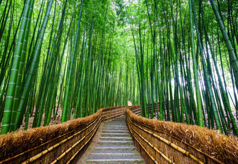 Wall Murals Bamboo Path to bamboo forest, Arashiyama, Kyoto, Japan