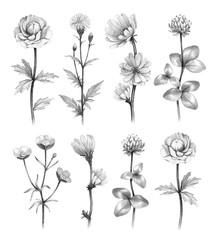 Wild flowers illustrations
