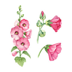 Watercolor illustration of mallow flower