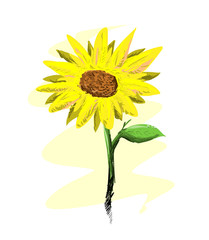 Sunflower, a hand drawn vector illustration of a fresh, beautiful sunflower features morning dew on its leaf, isolated on a simple background (editable).