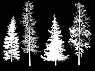 illustration with four white firs on black