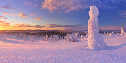 Wall Mural - Sunset over frozen trees on a mountain, Levi, Finnish Lapland