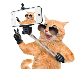 Cat  with peace fingers in black leather  taking a selfie together with a smartphone.