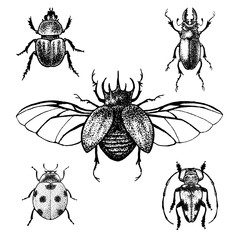 Hand drawn beetles set