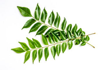Curry leaves - karapincha (Murraya koenigii)