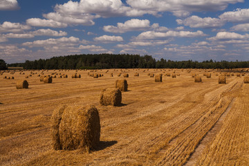 Picturesque golden field with haystacks on the background of clo