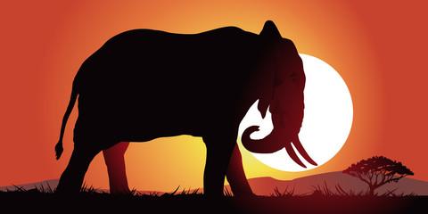 Elephant-couche de soleil
