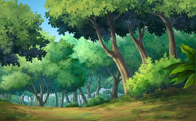 Forest daytime