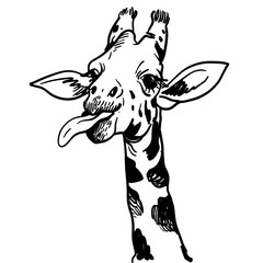 Hand drawn Illustration of Giraffe